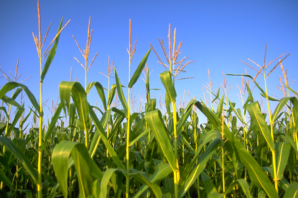 Case Study: FastSCAN Used to Improve Crop Yields